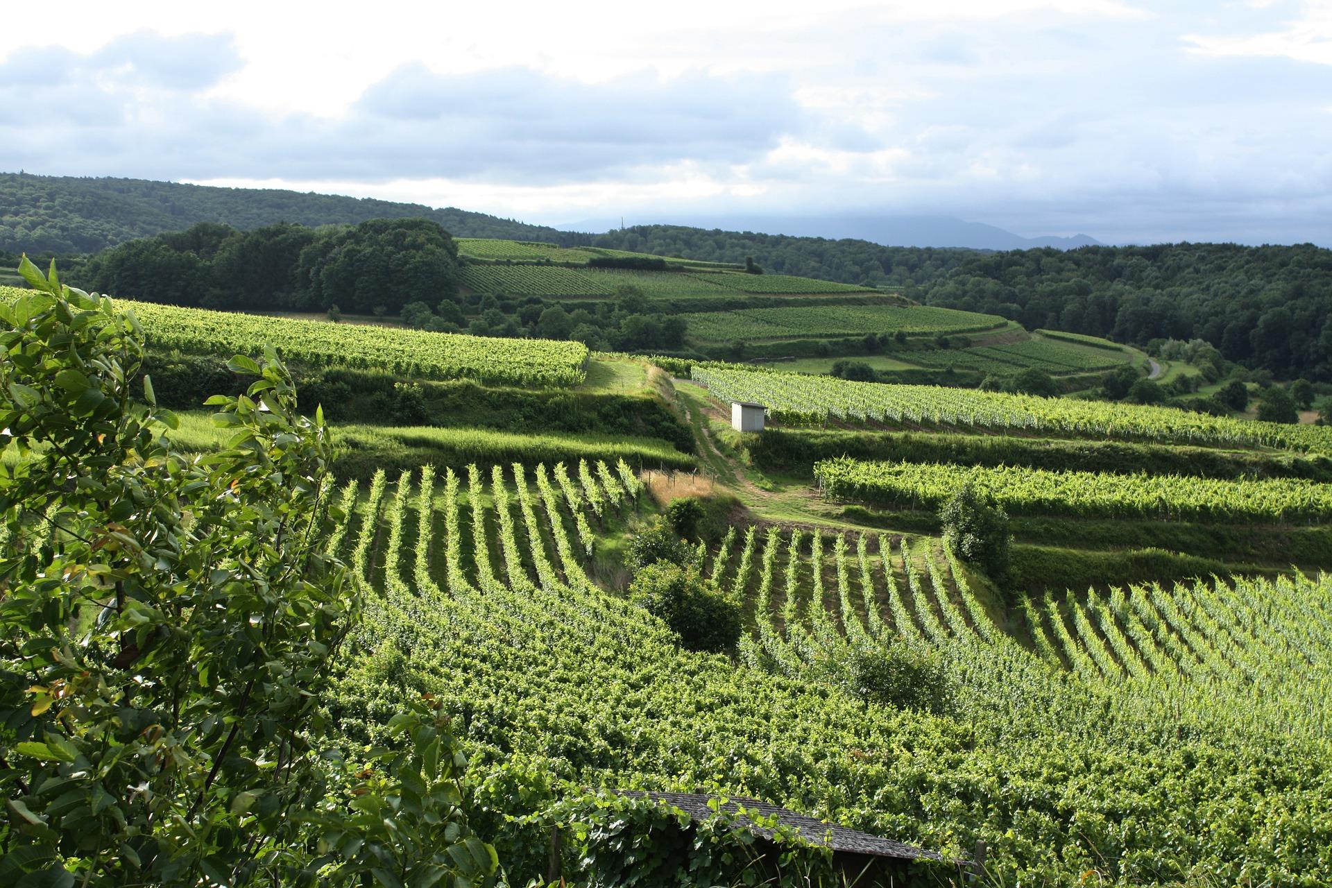 Wineries AcceleWeb
